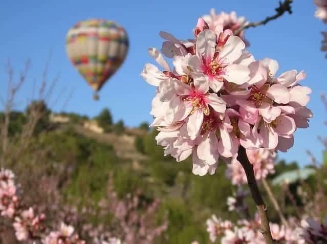 Mandelblüte auf Mallorca mit Heißluftballon entdecken